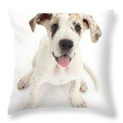 Great Dane Puppy Throw Pillow