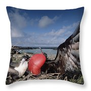 Great Frigatebirds Courting Throw Pillow