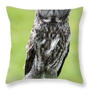Great Grey Owl, Water Valley, Alberta Throw Pillow