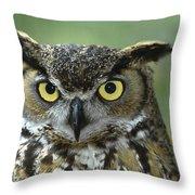 Great Horned Owl Bubo Virginianus Throw Pillow