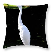 Great White Egret Singing In The Morning Light Throw Pillow
