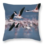 Greater Flamingos In Flight Over Lake Throw Pillow