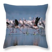 Greater Flamingos Run Through Shallow Throw Pillow