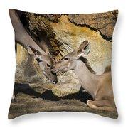 Greater Kudu Affection Throw Pillow