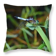Green And Blue Dragonfly Throw Pillow