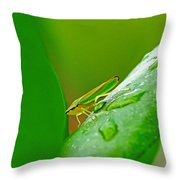 Green And Yellow Bug Throw Pillow
