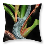 Green Arboreal Alligator Lizard Abronia Throw Pillow