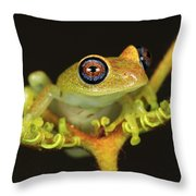 Green Bright-eyed Frog Boophis Viridis Throw Pillow