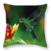 Green Crowned Brilliant Hummingbird Throw Pillow