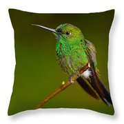 Green-crowned Brilliant Throw Pillow