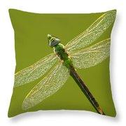 Green Darner Throw Pillow