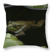 Green Frog And Lily Pads 9613 Throw Pillow