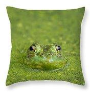 Green Frog Eyes Throw Pillow