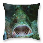 Green Grouper With Open Mouth, North Throw Pillow