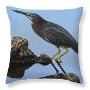 Green Heron Visiting The Pond Throw Pillow