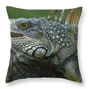 Green Iguana Barro Colorado Island Throw Pillow