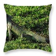 Green Iguana Throw Pillow