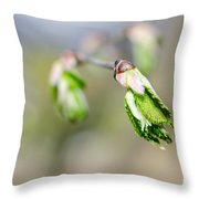 Green Leaf In Spring Throw Pillow