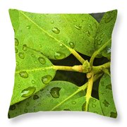Green Leaves With Water Droplets Throw Pillow