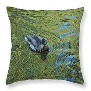 Green Pool Throw Pillow