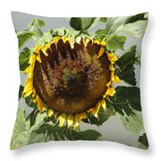 Green Ray Throw Pillow