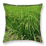 Green Rice Field In Taiwan Throw Pillow