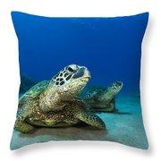 Green Sea Turtle Couple Throw Pillow