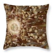 Green Sea Urchin Throw Pillow