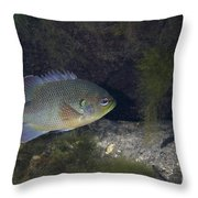 Green Sunfish Swimming Along The Rocky Throw Pillow