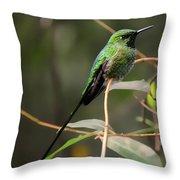 Green Tailed Trainbearer Hummingbird Stylized Throw Pillow