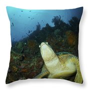 Green Turtle On Reef, Manado, North Throw Pillow