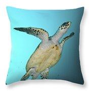 Green Turtle Swimming, Sabah, Malaysia Throw Pillow