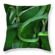 Green Vine Snake Oxybelis Fulgidus Throw Pillow