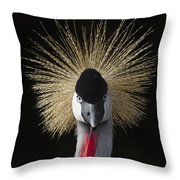 Grey Crowned Crane Balearica Regulorum Throw Pillow