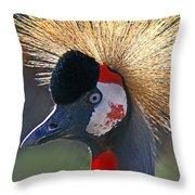 Grey-crowned Crane Throw Pillow