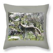 grey Fox 2 Throw Pillow