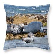 Grey Seals Throw Pillow