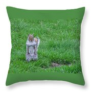 Grey Squirrel In The Rain II Throw Pillow
