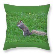 Grey Squirrel In The Rain Throw Pillow