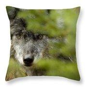 Grey Wolf, Outside Golden, British Throw Pillow