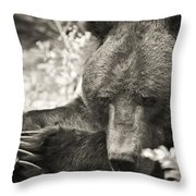 Grizzly At Rest Throw Pillow