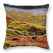 Grizzly Bears And Fall Colours, Denali Throw Pillow