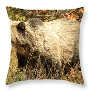 Grizzly Camouflage Throw Pillow
