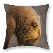 Grizzly Hanging Head Throw Pillow