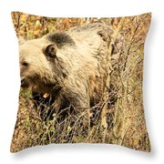 Grizzly In The Brush Throw Pillow