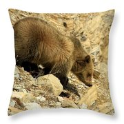 Grizzly On The Rocks Throw Pillow