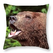 Grizzly Or Alaska Brown Bear Throw Pillow