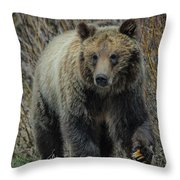 Grizzly Ramble Throw Pillow