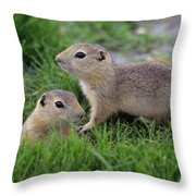 Ground Squirrels, Oak Hammock Marsh Throw Pillow