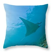 Group Of Manta Rays In Blue Water Throw Pillow